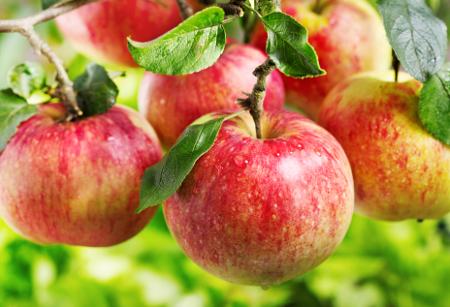 Flavonoidok almák