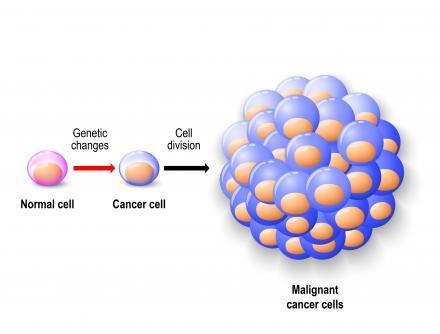 Rákos sejtek