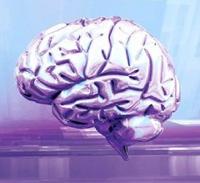 agy, homoszexuális, heterszexuális