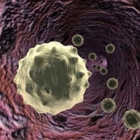 fehérvérsejt, melanoma